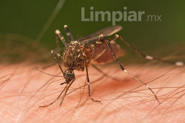 Prevenirse de los mosquitos
